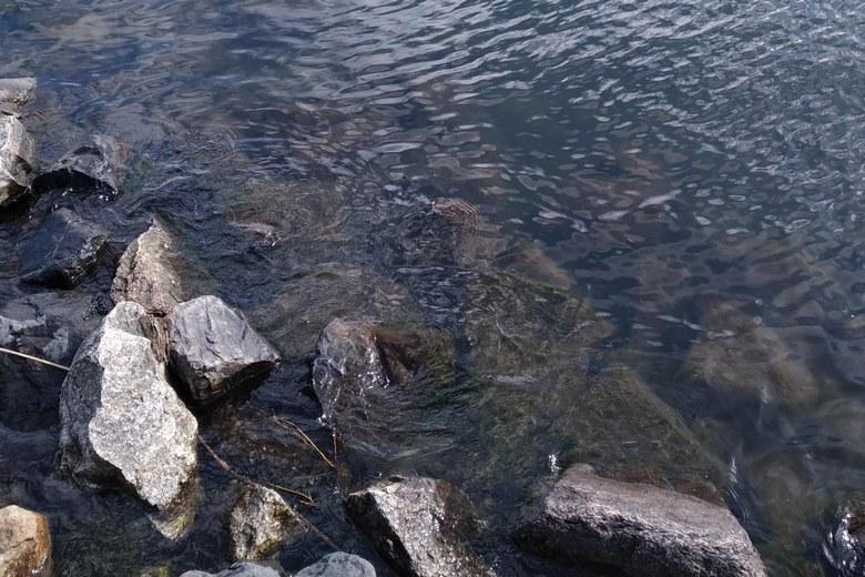 ワンドの護岸のゴロタ石