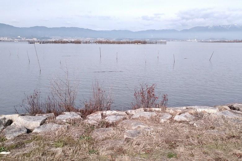 赤野井1の琵琶湖側の湖岸と杭