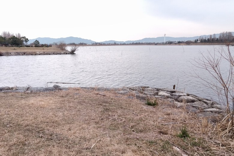 新守山川の河口と杭