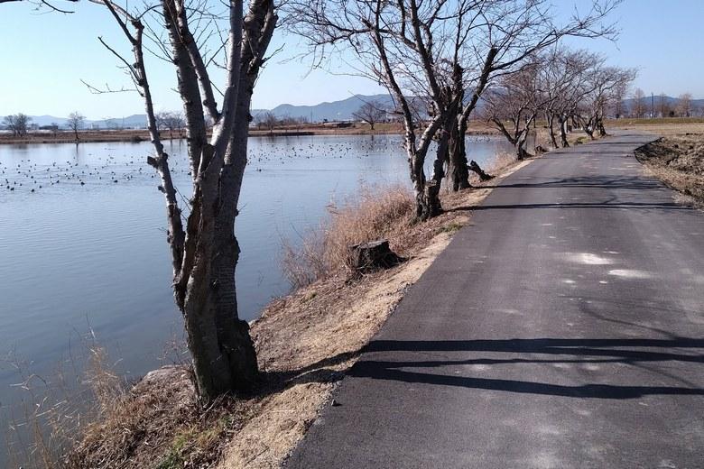 平湖の西岸と農道