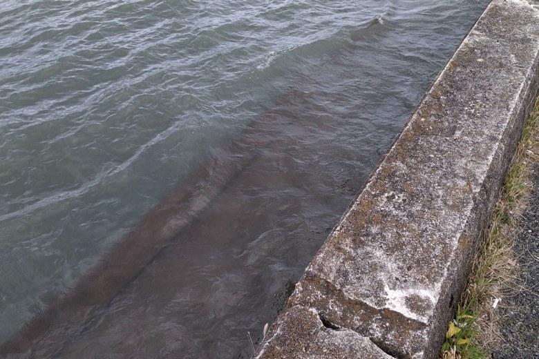 木浜沖の護岸とテトラブロック