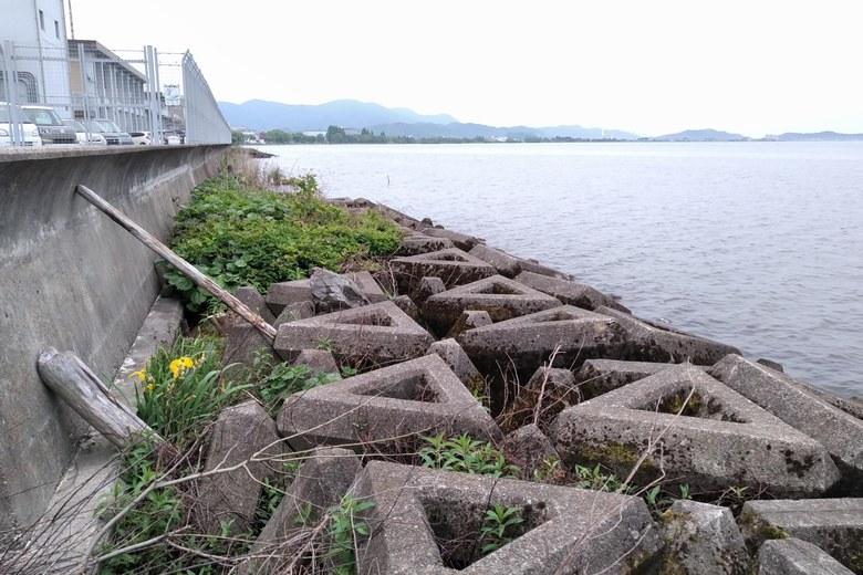 長浜水道企業団裏の、北側のテトラブロック帯