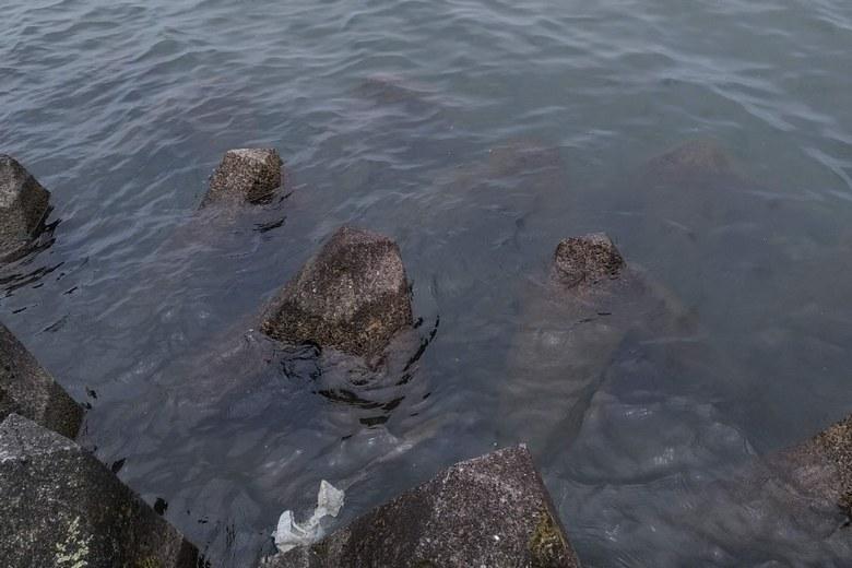 水中に積まれたテトラブロック