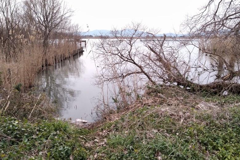 下物内湖の北岸のアシ林と杭