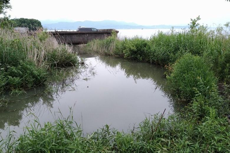 相撲船溜まりの隣に流れ出る水門からの流れ込み