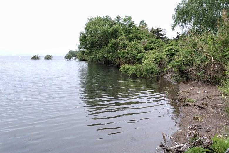水門周りのブッシュや雑木林
