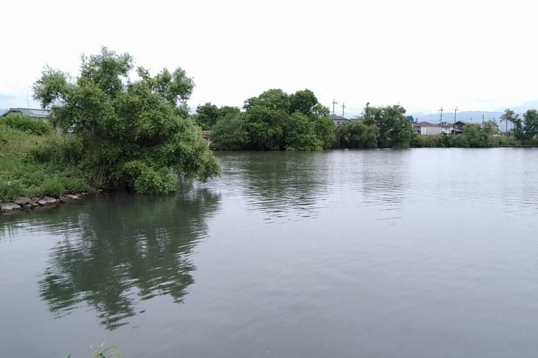 水門周りの、シャローエリアのワンド