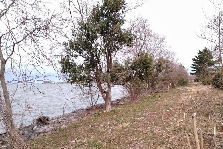 津田江2の岸辺に生えている木
