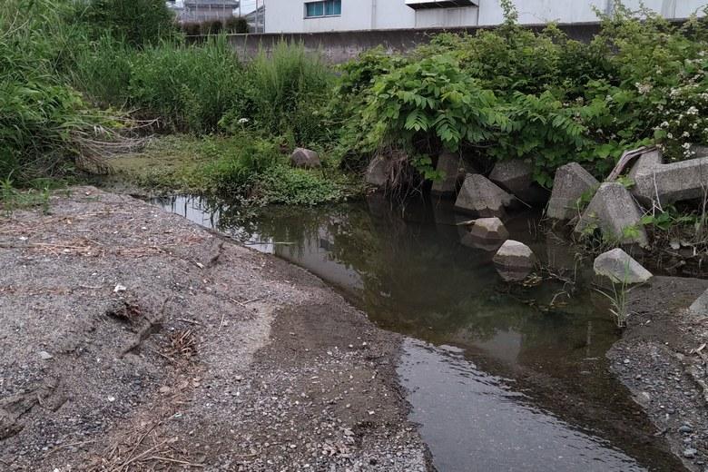薬師堂川の流れ込み