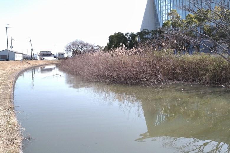 山寺川の岸辺と、木やアシのブッシュ