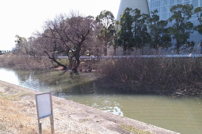 山寺川のブッシュと、建物の日影