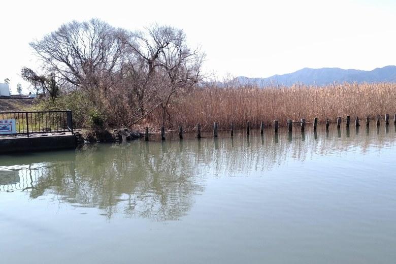 山寺川河口の、南側にあるアシ林と杭
