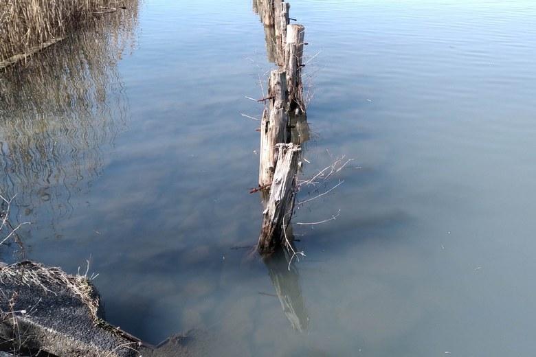 石積みで固められたアシ林と保護杭