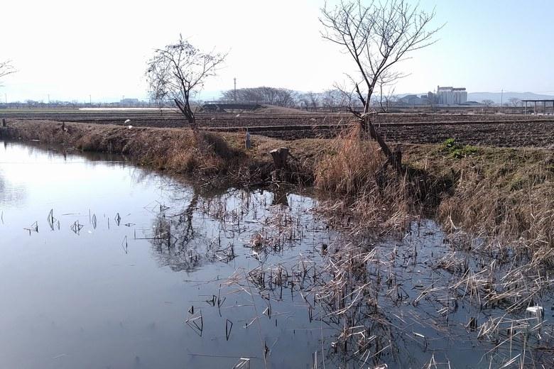 柳平湖の南岸とあぜ道