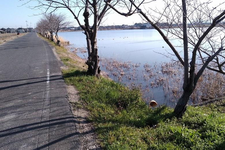 柳平湖の西岸と農道