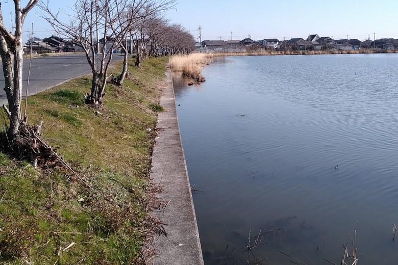 柳平湖の西岸のコンクリート護岸