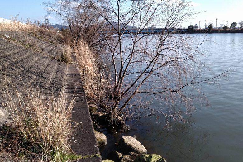 大同川河口の、東の護岸の石積み
