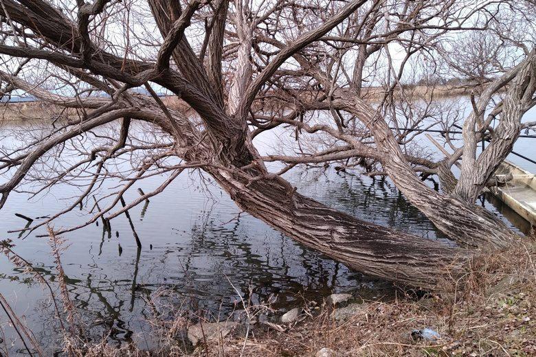 御旅所エリアの、木のオーバーハング