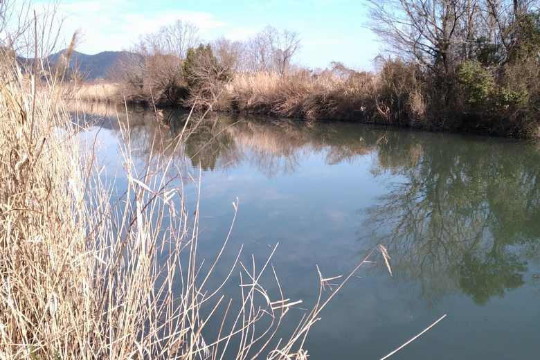 蛇砂川と、両岸のブッシュ