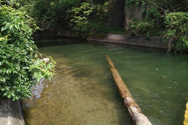諸子川と倒木