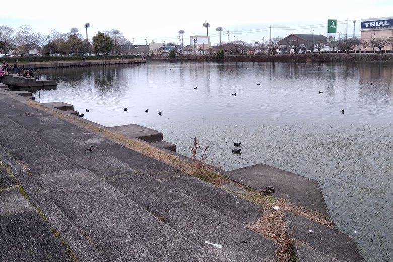 旧彦根港の、船溜まりの南側エリア
