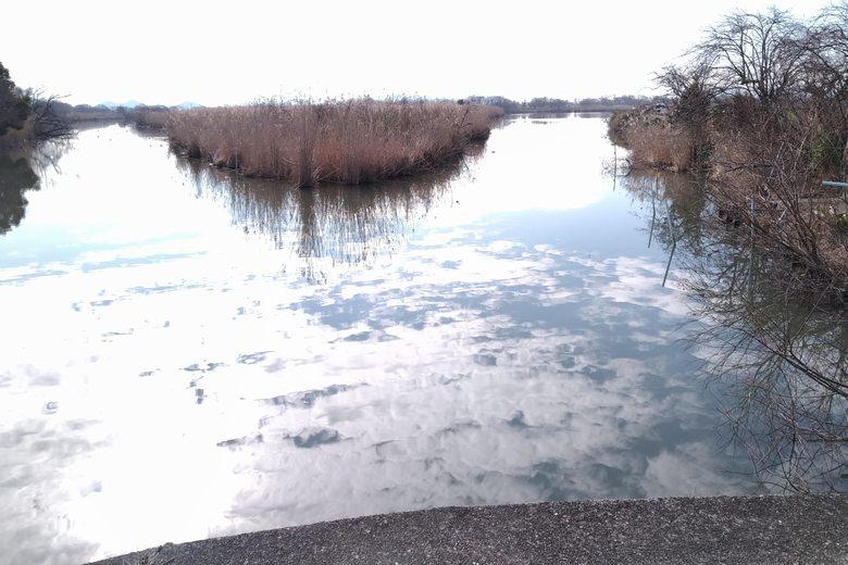 西の湖の権座をアシ
