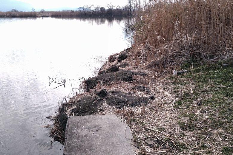 コンクリート護岸から石が入った袋の岸辺に変わる