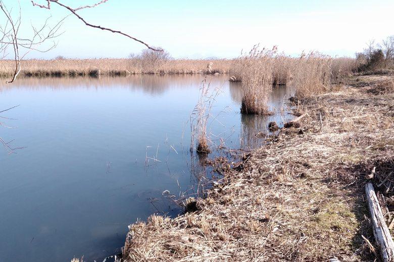 西の湖園地の岸辺
