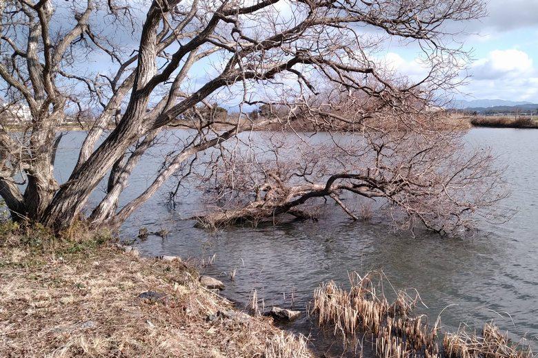 野田沼の岬にある、倒木やオーバーハング