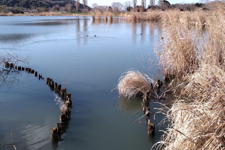 野田沼の岬の付け根にある導水管