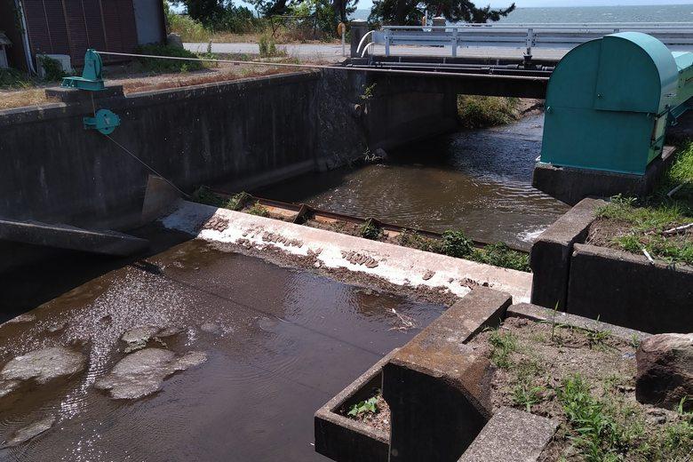 曽根沼から琵琶湖への水路の水量がない