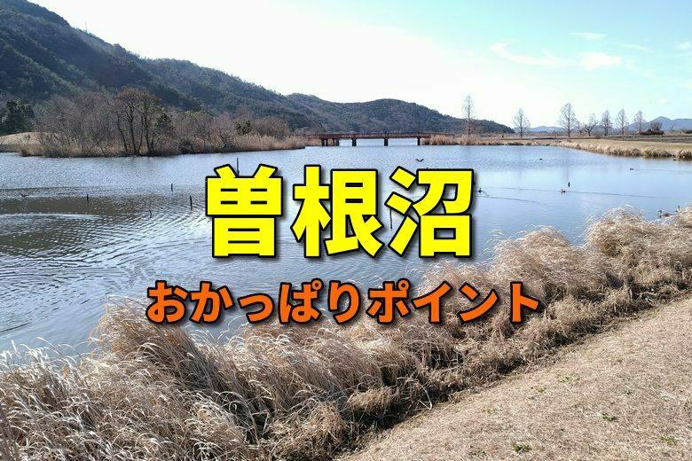 曽根沼のおかっぱりバス釣りポイント