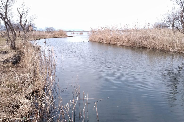 伊庭内湖に流れ込む瓜生川