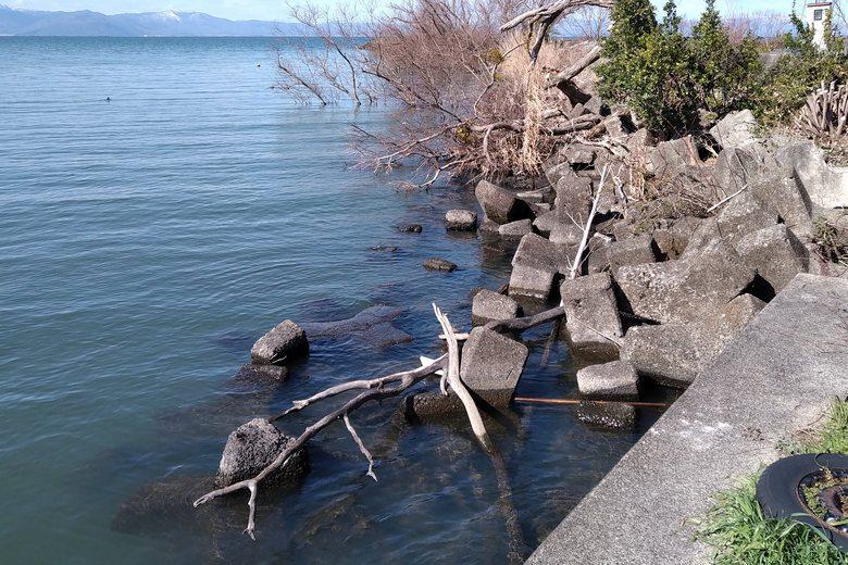宇曽川河口の北岸のテトラブロックと、沈んだ木