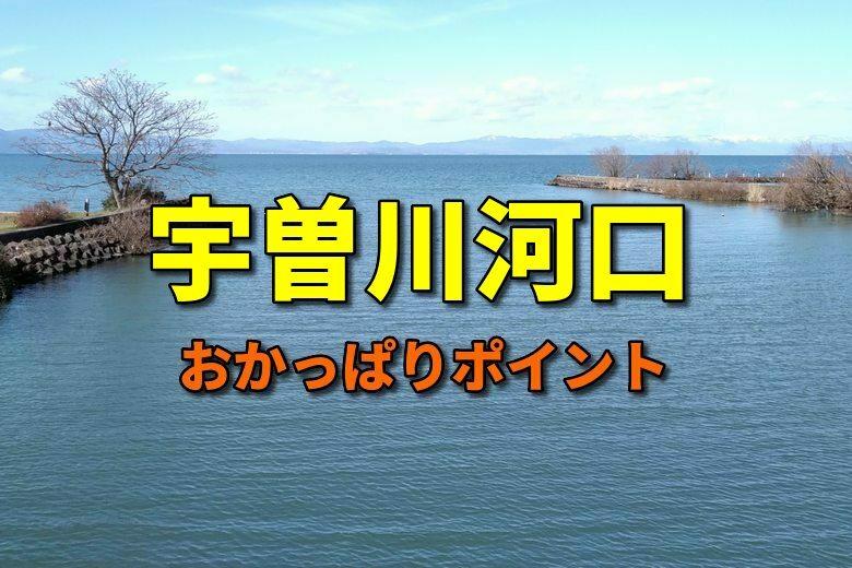 宇曽川河口のおかっぱりバス釣りポイント