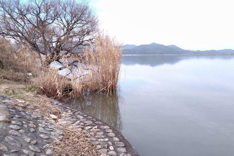 山本川の護岸とブッシュ