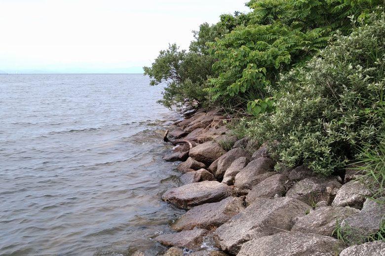 湖岸緑地・吉川の北の石積み護岸