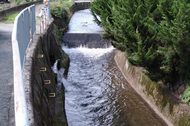 雨の後で水量が多い川
