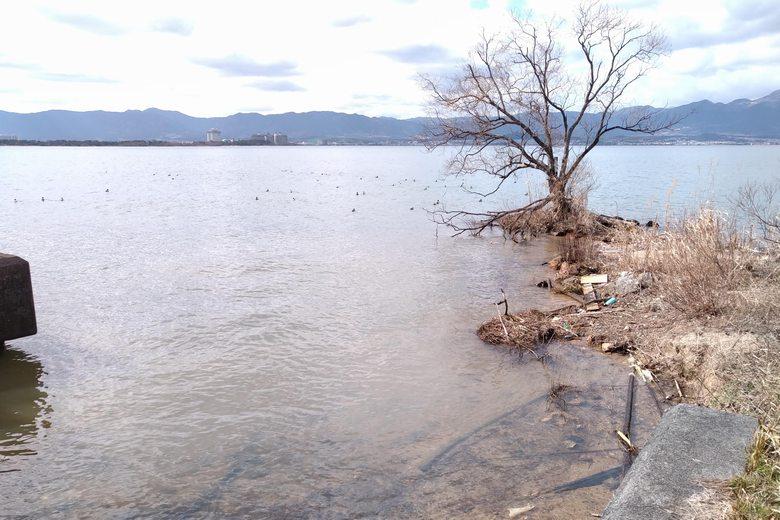 南の水路の流れ込みと浅瀬
