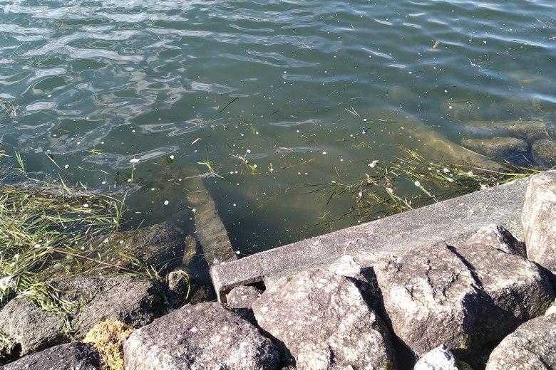 小さい水路の流れ込み