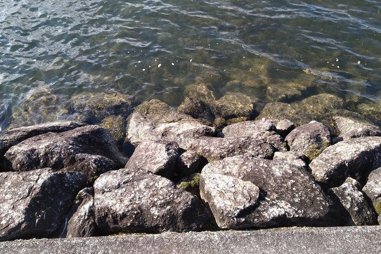 石積み護岸の様子