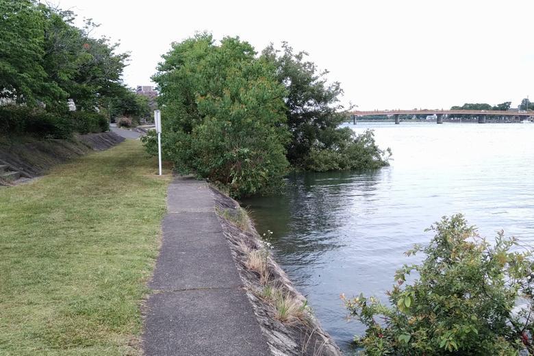 ボート部の船着き場の近くにあるブッシュ