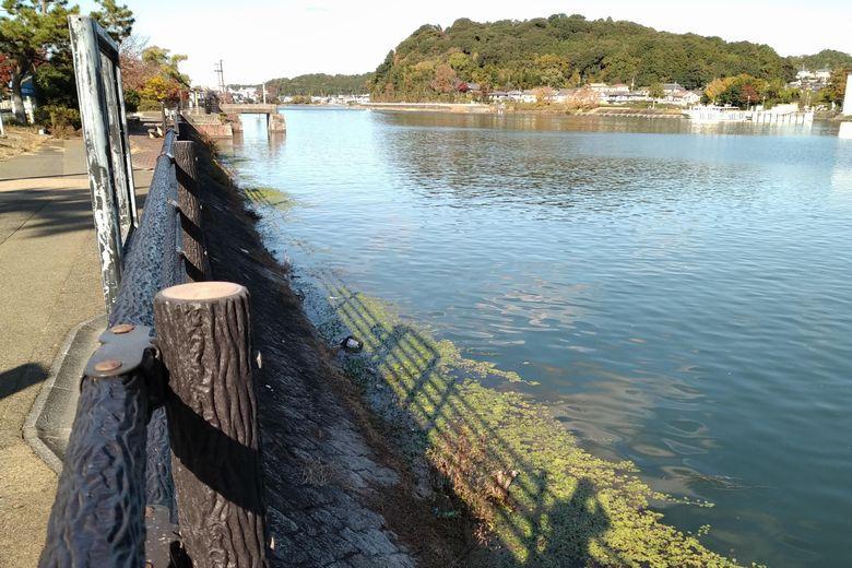 瀬田川洗堰の前の岸辺