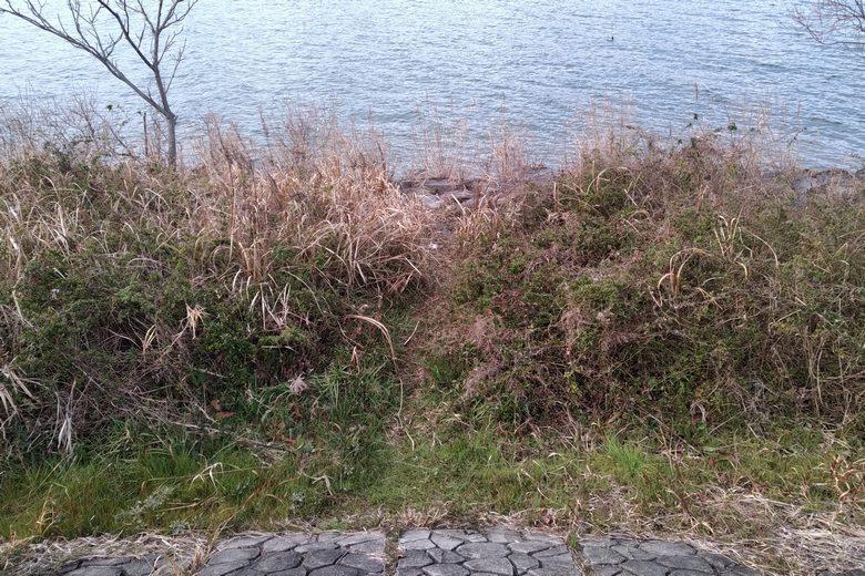 ピエリ守山裏の石積み護岸