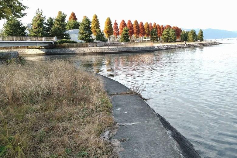 日本精工の流れ込み前の護岸