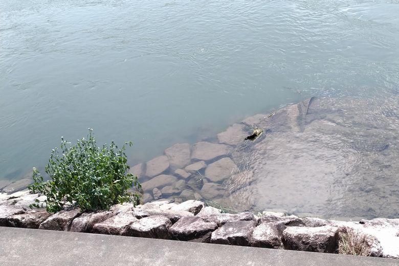 岸際の浅瀬の切れ目と、石積みのブレイク