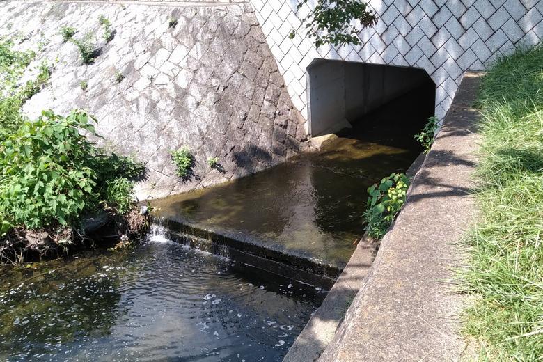 新緑苑エリアの南の流れ込み