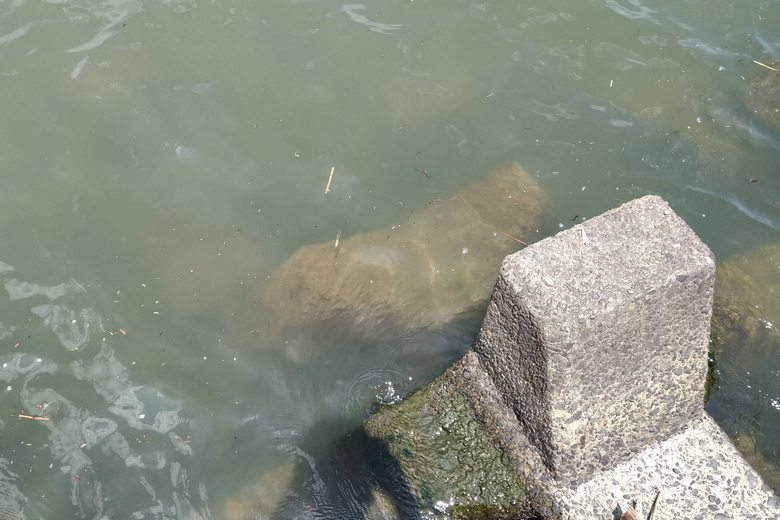 水中に沈んでいるテトラブロック